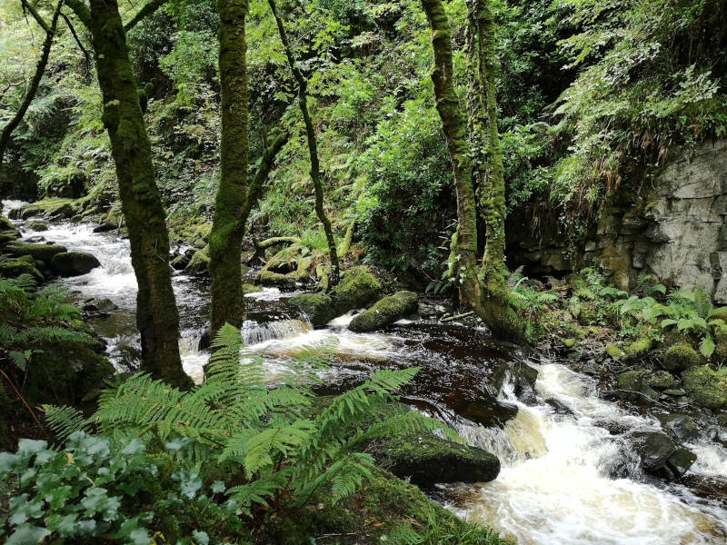 Killarney_Nationalpark_Irland_Wasserfall