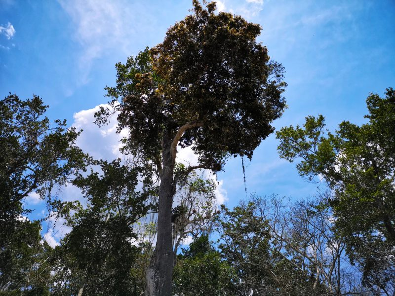 mexiko-yucatan-rundreise-mayastätte calakmul1